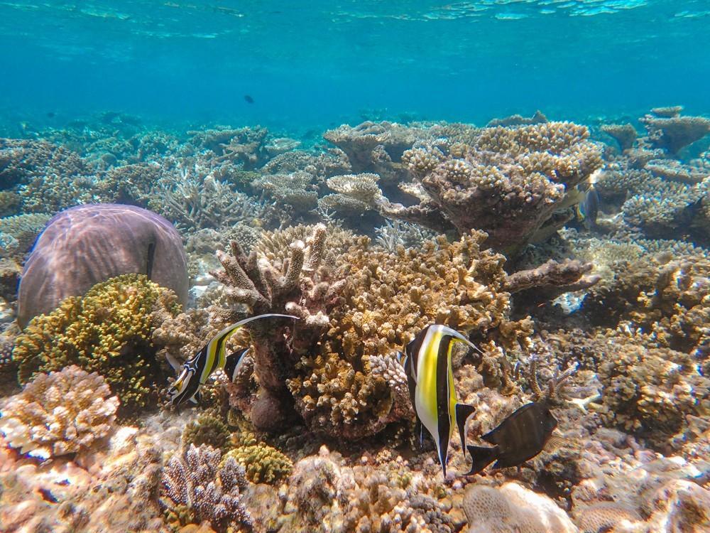 Huvafen Fushi Maldives -37
