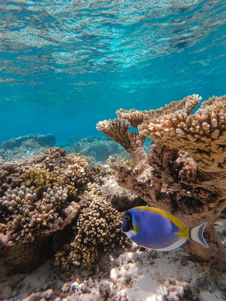 Huvafen Fushi Maldives -38