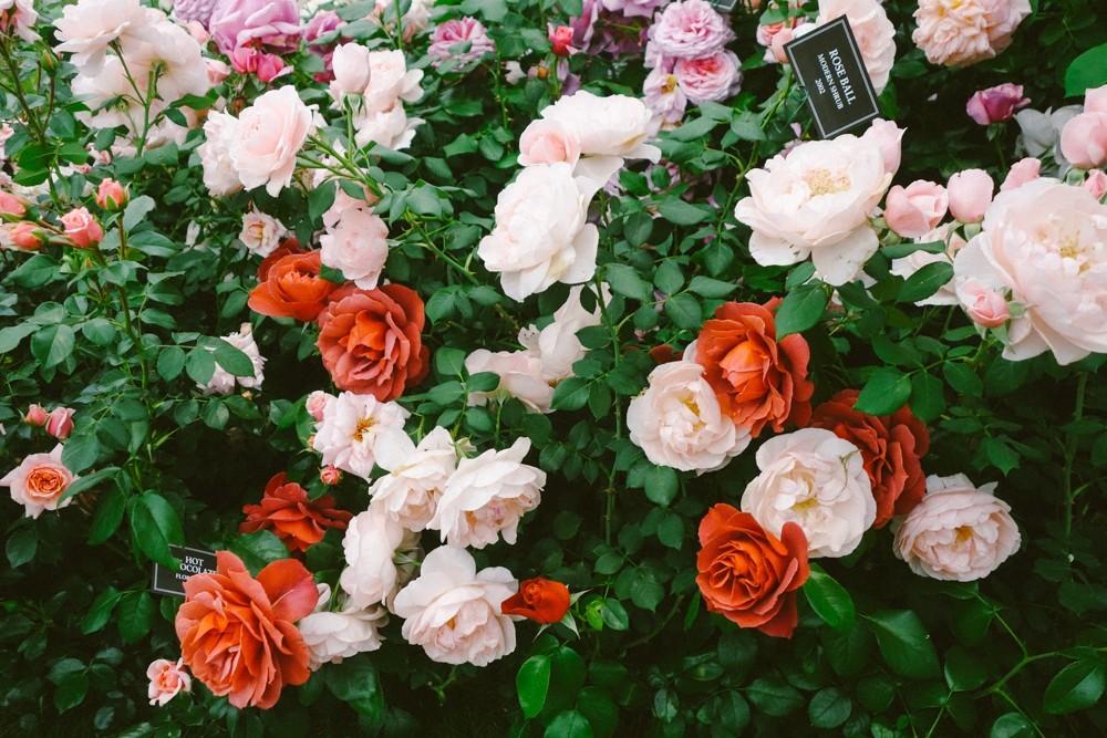 chelsea flower show 2015-10