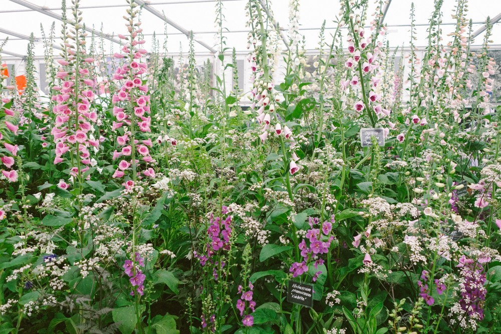chelsea flower show 2015-11