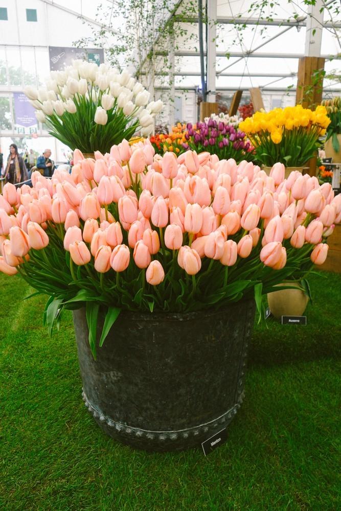 chelsea flower show 2015-12