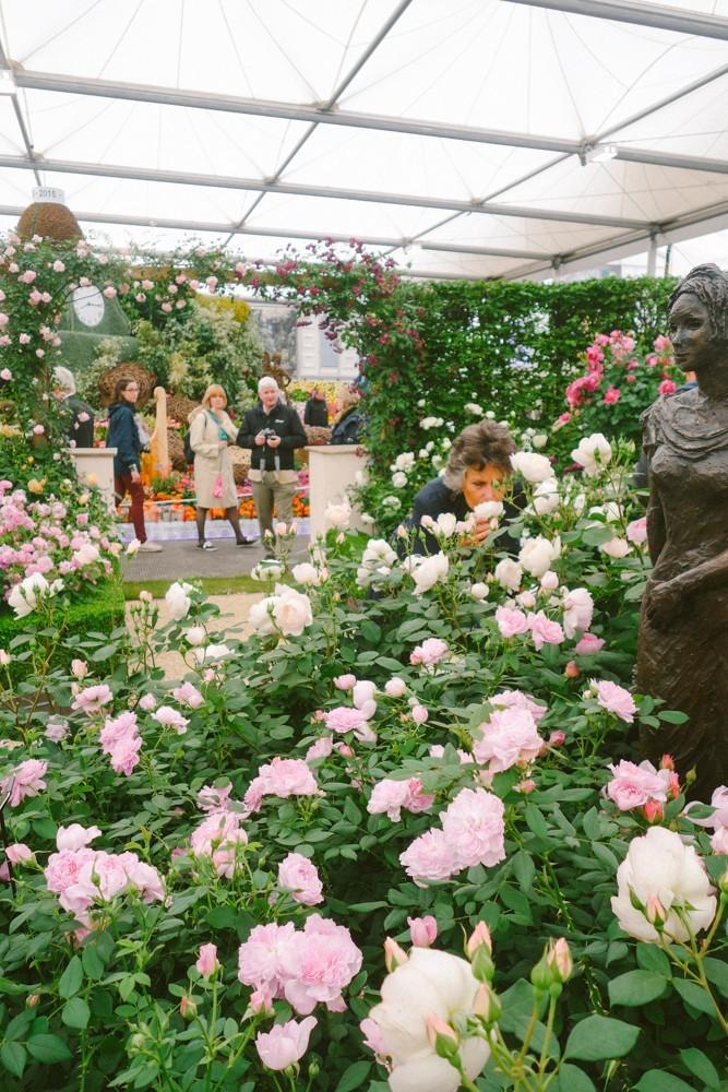 chelsea flower show 2015-13