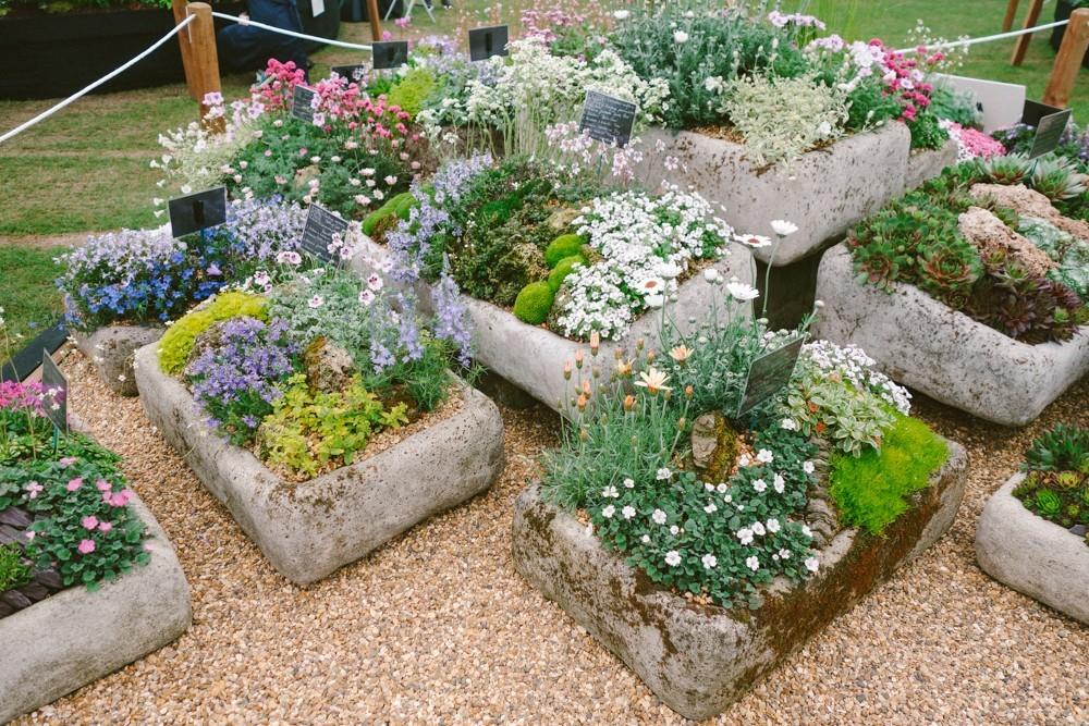 chelsea flower show 2015-16