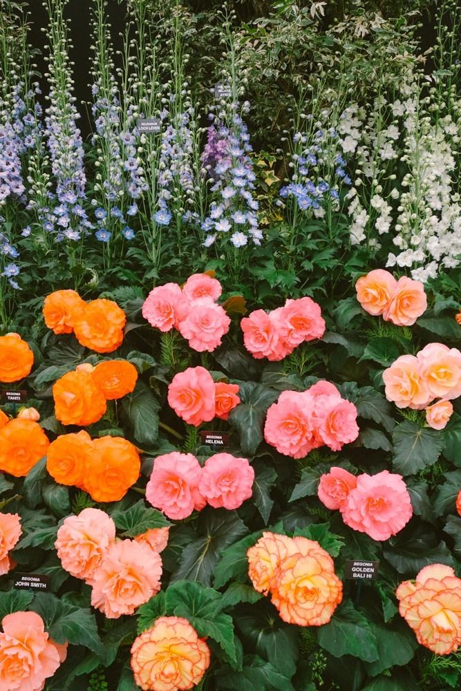 chelsea flower show 2015-17