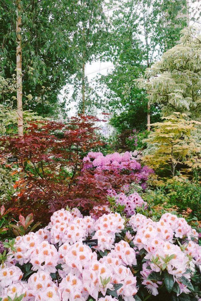chelsea flower show 2015-20