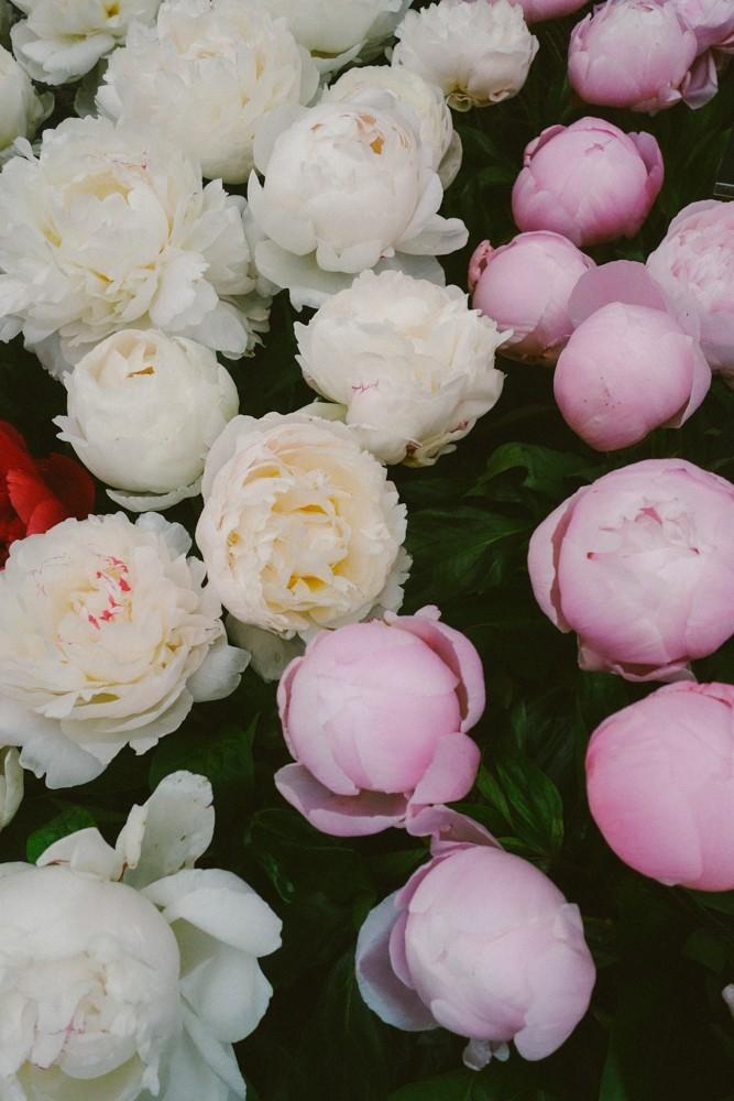 chelsea flower show 2015-27