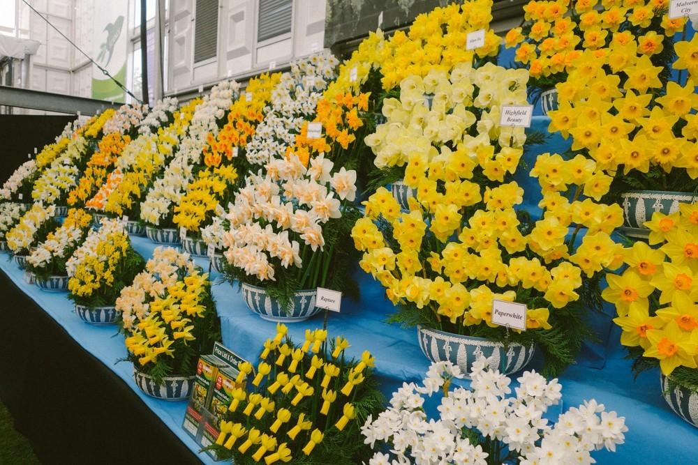 chelsea flower show 2015-29
