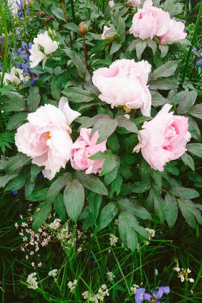 chelsea flower show 2015-51