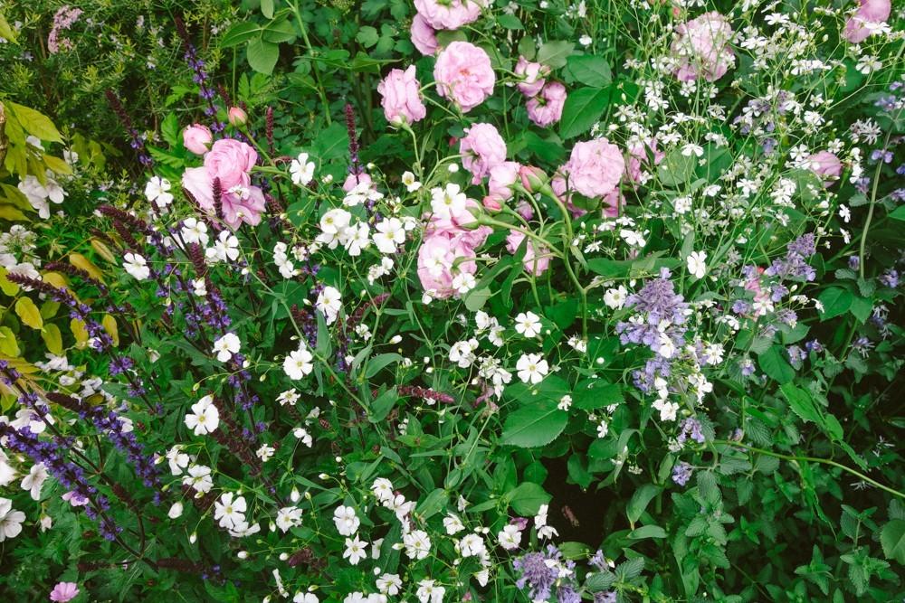 chelsea flower show 2015-67