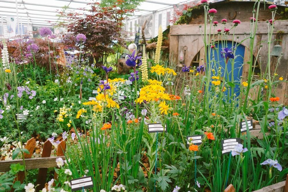 chelsea flower show 2015-7
