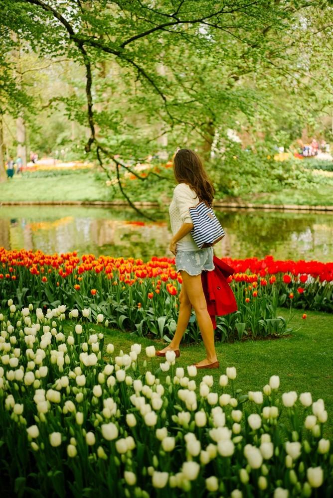 keukenhof tulip gardens-11