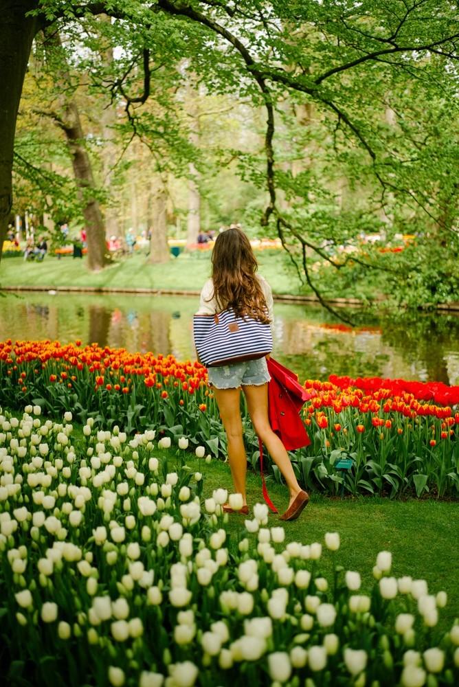 keukenhof tulip gardens-12