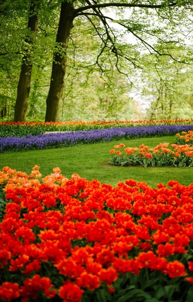 keukenhof tulip gardens-14