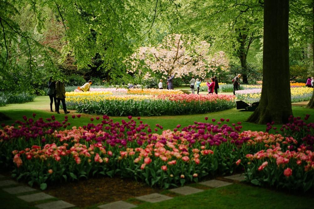 keukenhof tulip gardens-9