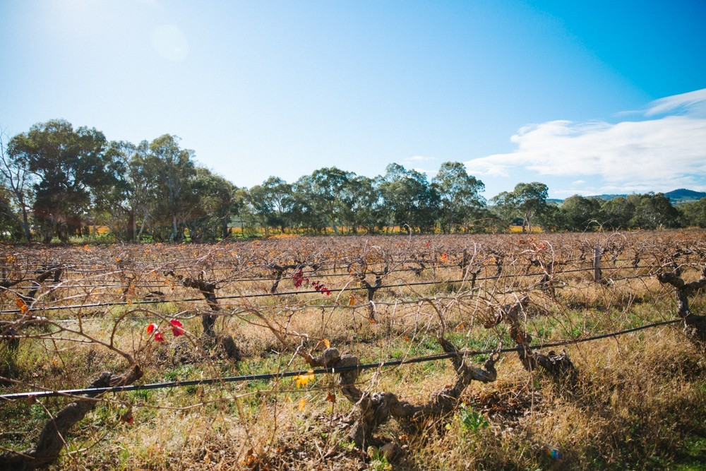Australian Wine-16