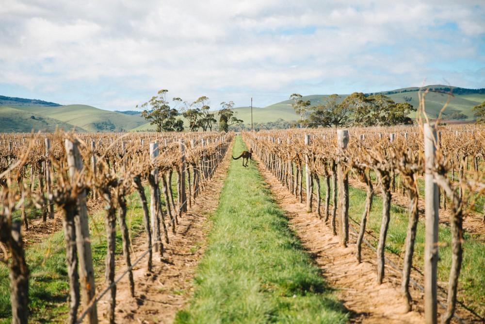 Australian Wine-17