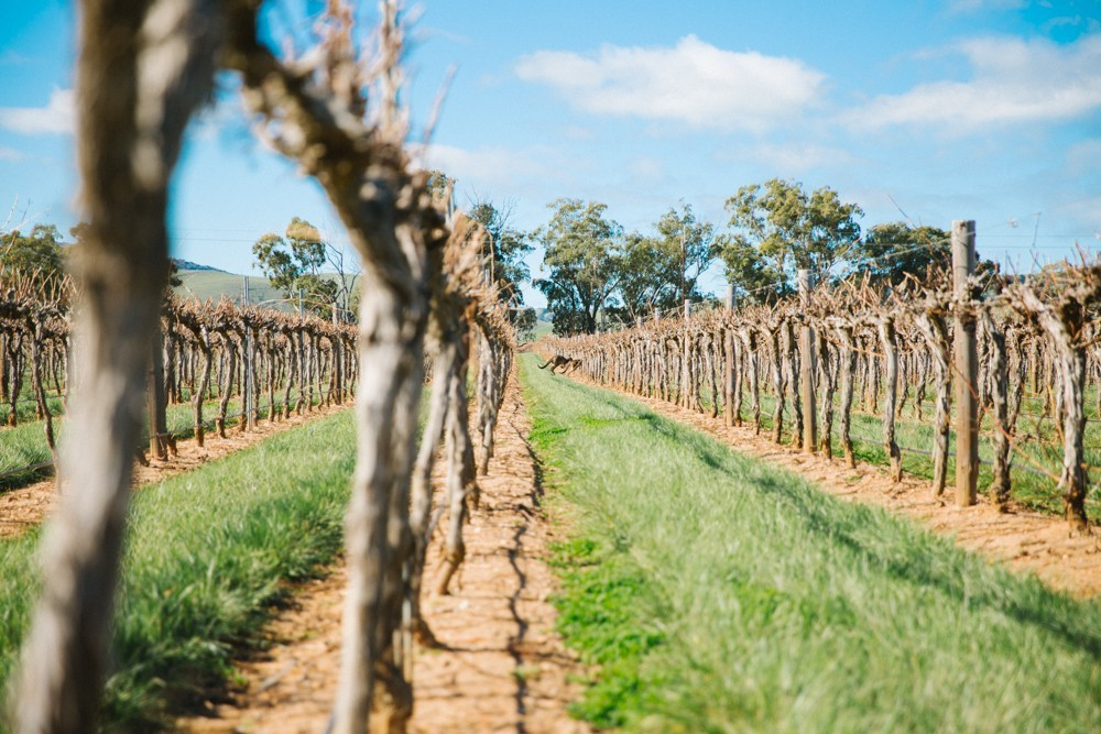 Australian Wine-18
