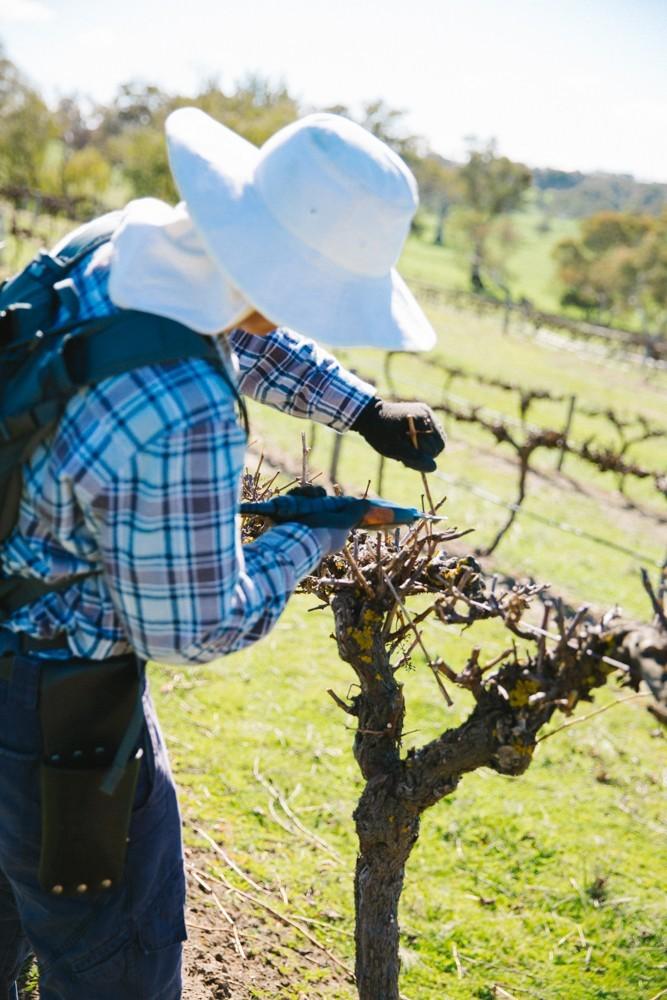 Australian Wine-24