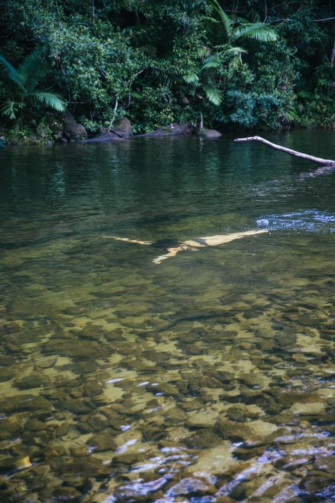 Chasing Waterfalls Queensland-40