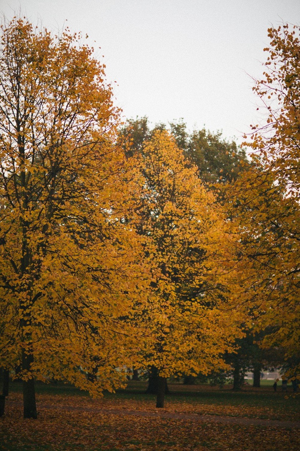 Autumn in London-1