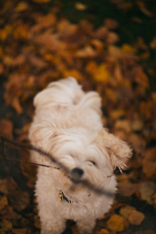 Autumn in London-14