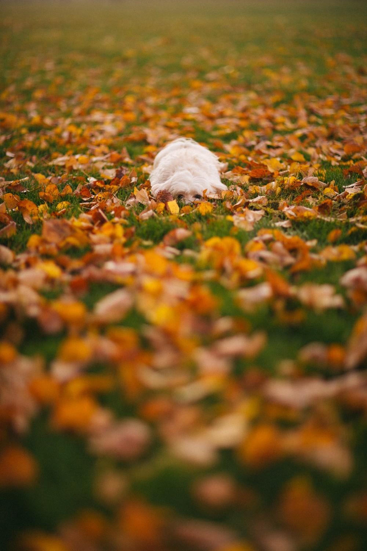 Autumn in London-31