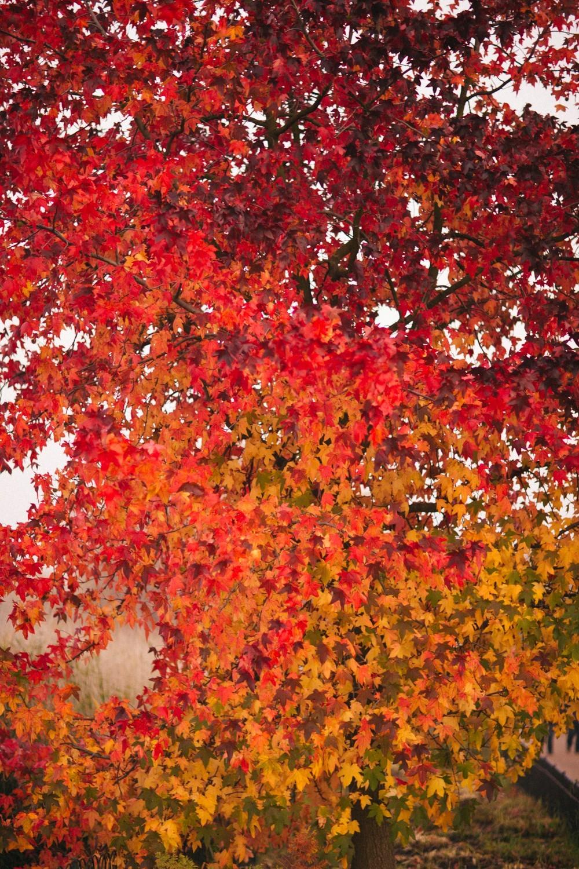 Autumn in London-37