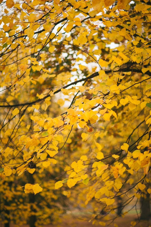 Autumn in London-6