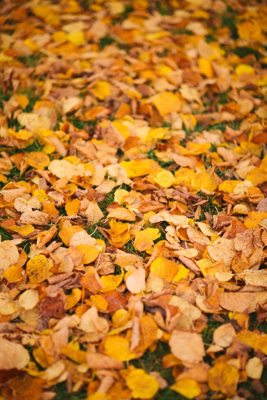 Autumn in London-7