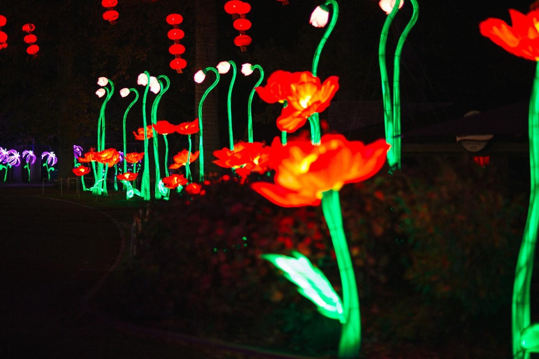 Longleat Festival of Light -36