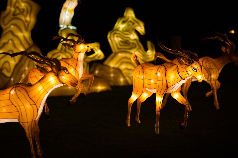 Longleat Festival of Light -54