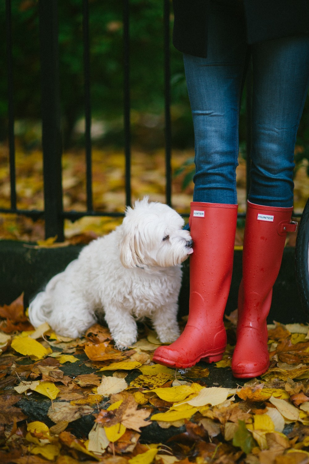 Rain boots and puppies!