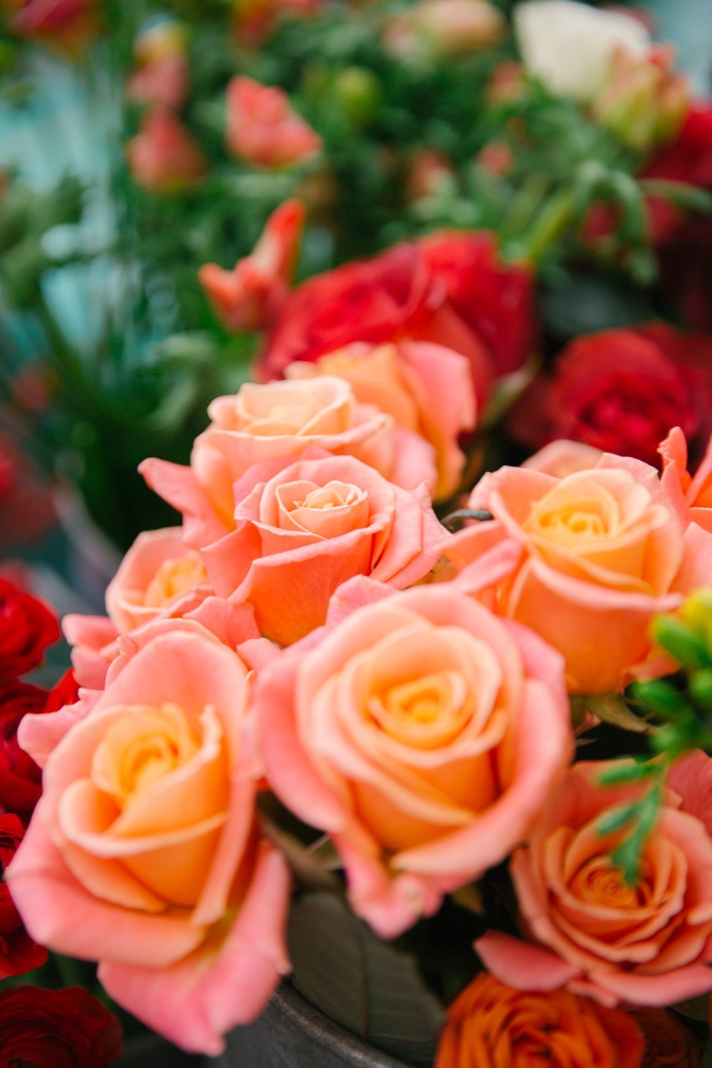 Pink and Orange Roses in Notting Hill