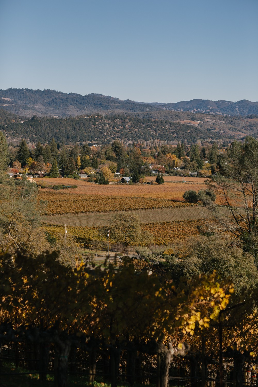 Napa Valley -13