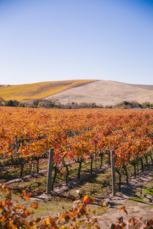Napa Valley Wine Tasting-15