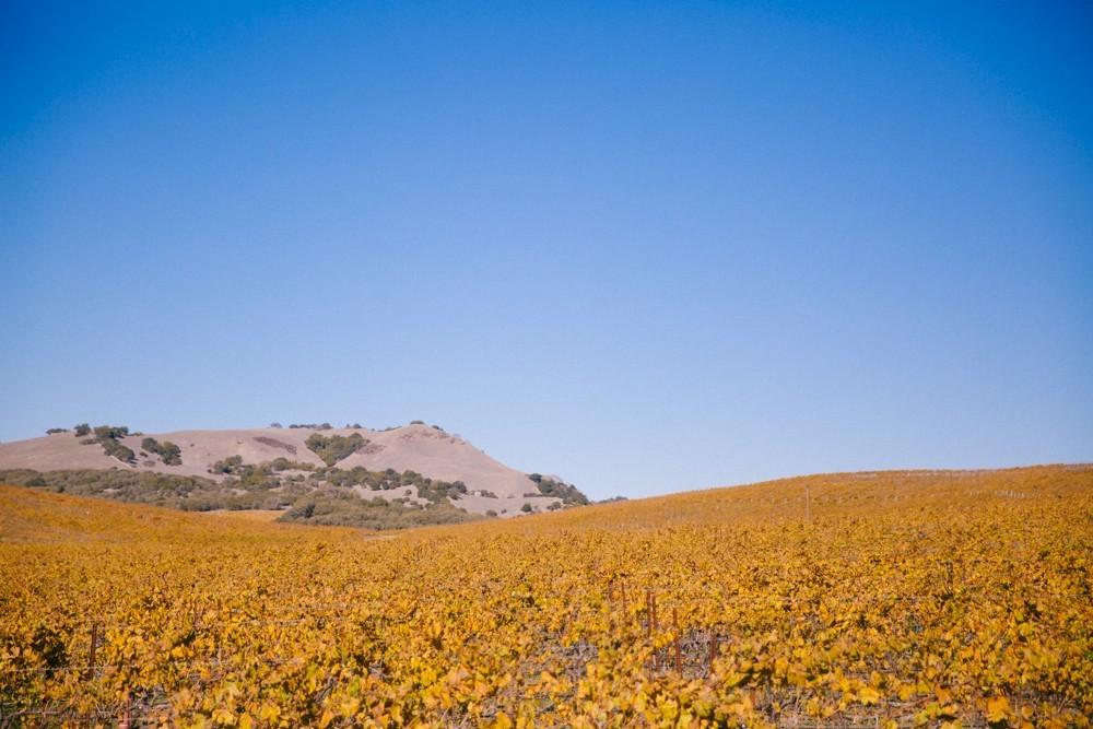 Napa Valley Wine Tasting-18