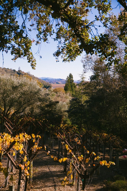 Napa Valley Wine Tasting-22