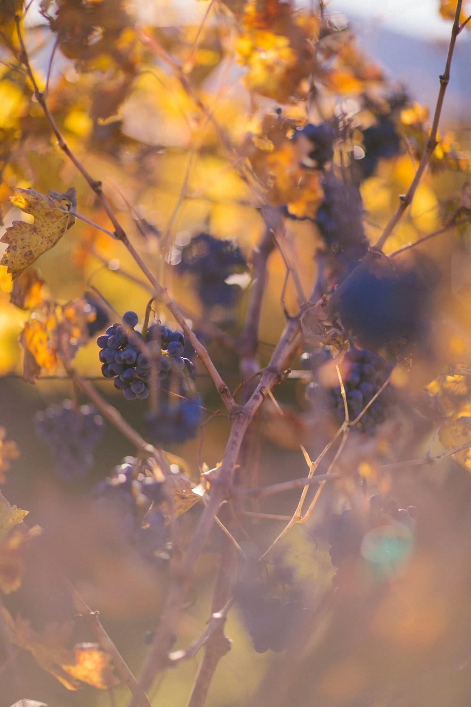 Napa Valley Wine Tasting-32