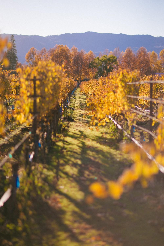 Napa Valley Wine Tasting-38