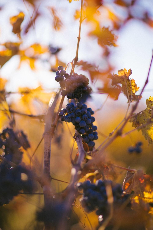 Napa Valley Wine Tasting-39