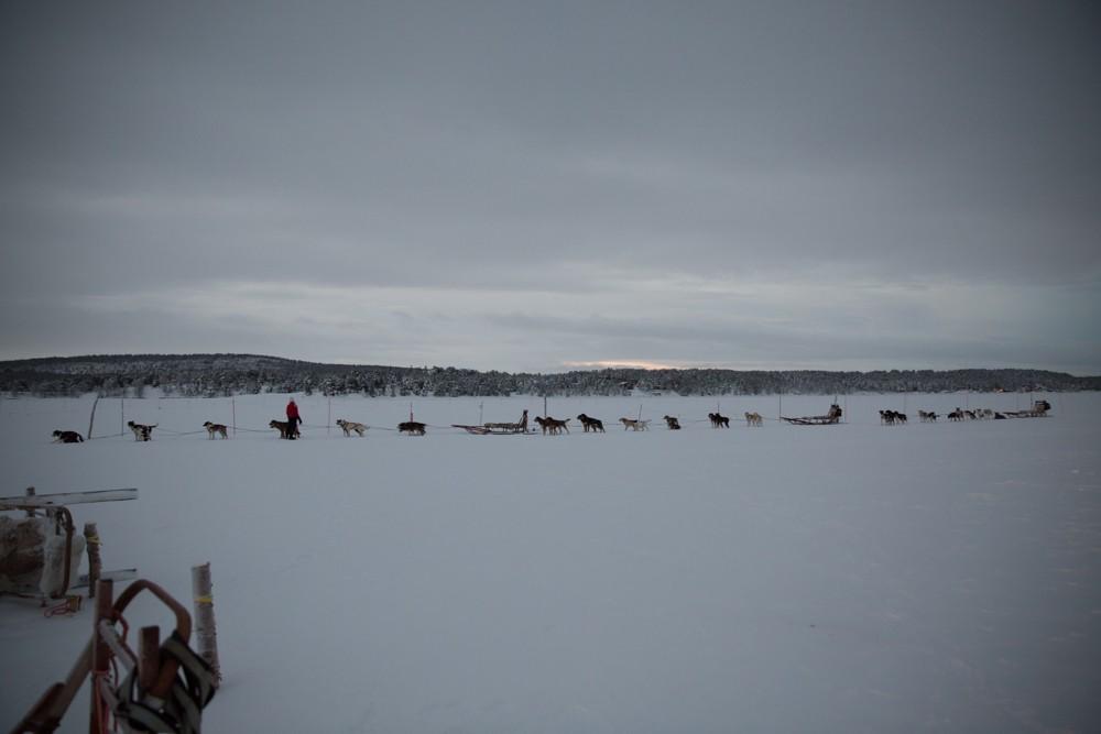 Husky Sledding Lapland-16