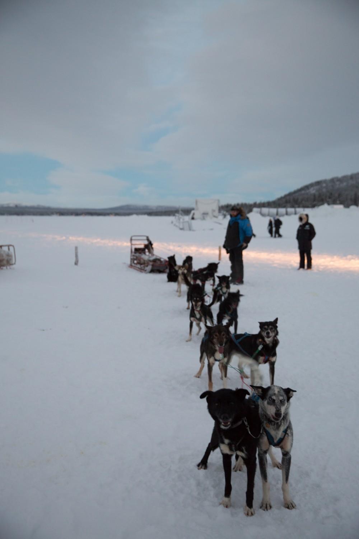 Husky Sledding Lapland-17