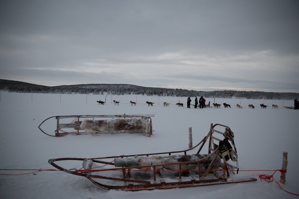 Husky Sledding Lapland-18