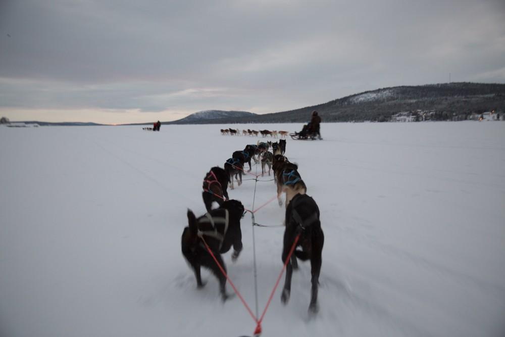 Husky Sledding Lapland-19