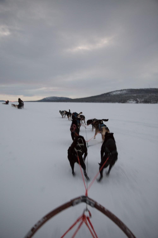 Husky Sledding Lapland-20