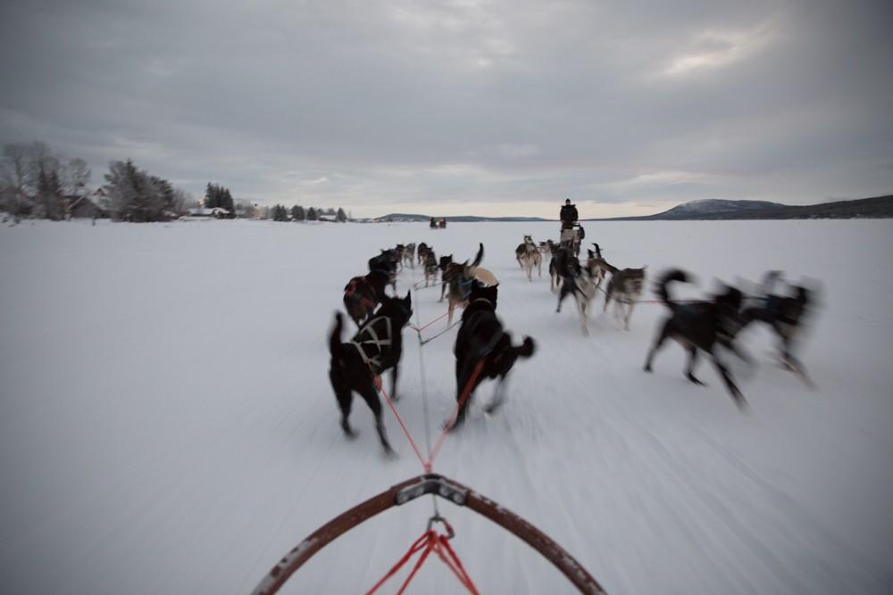 Husky Sledding Lapland-21