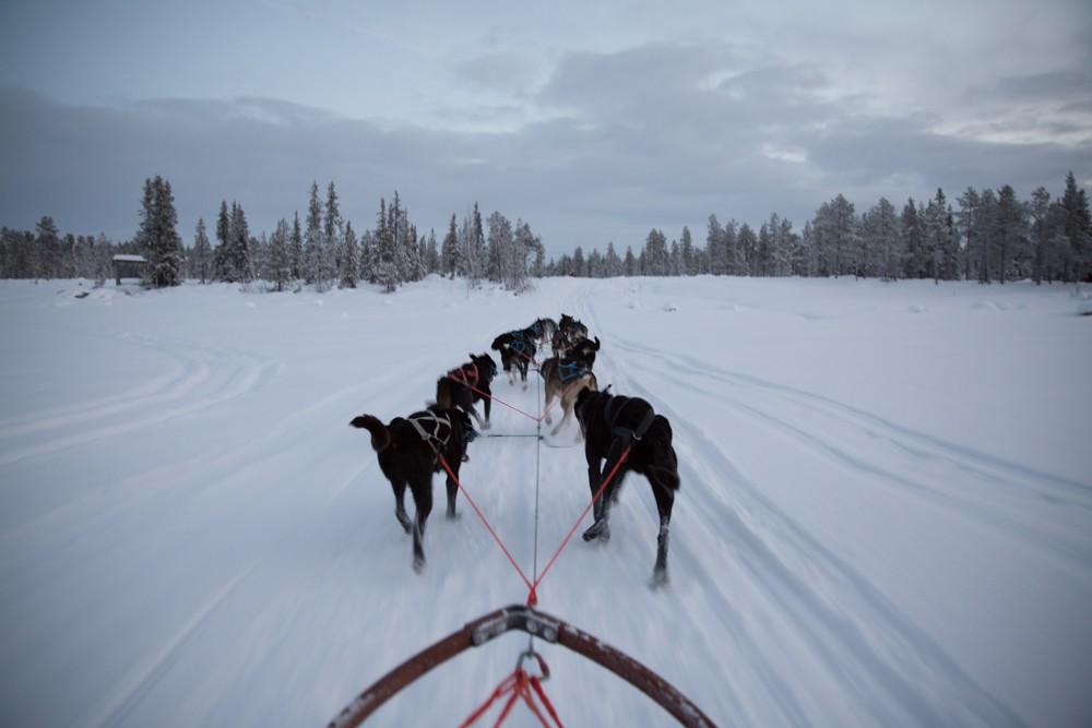 Husky Sledding Lapland-23