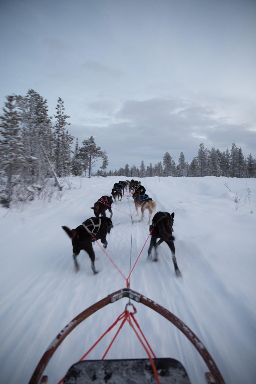 Husky Sledding Lapland-24