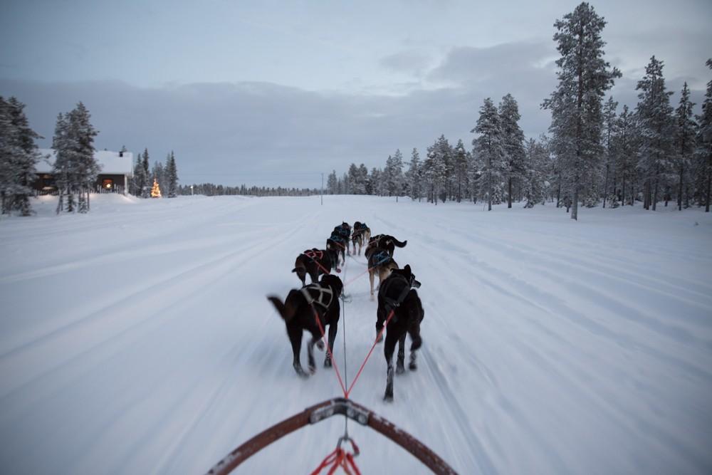 Husky Sledding Lapland-25
