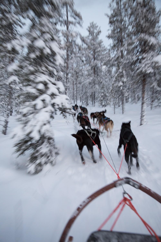 Husky Sledding Lapland-26